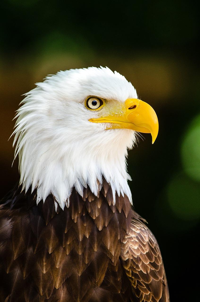 TOP 12 Curiosidades de los Ojos en el mundo animal